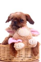 junger Hund mit Hase im Korb