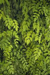 textura hojas_verdes
