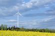 Windrad und Rapsfeld