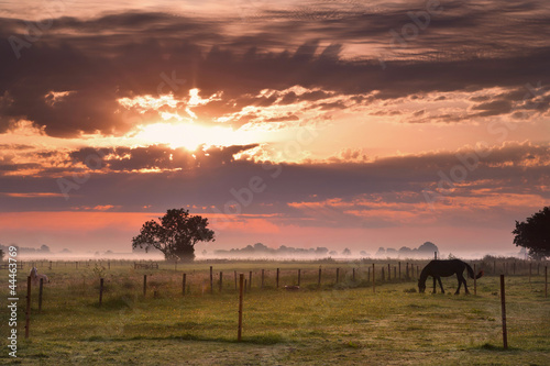 horse silhouette on morning pasture