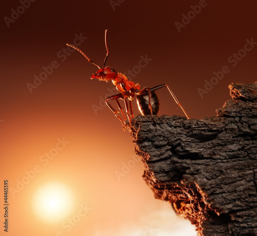 ant on top of rock, mountain peak, concept