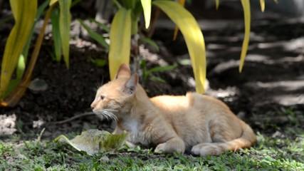 Video Schwarz Weiße Katze