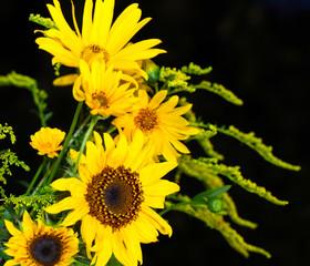 Gelbe Blüten leuchten vor Nachthimmel