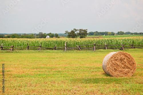 rural agricultural scene