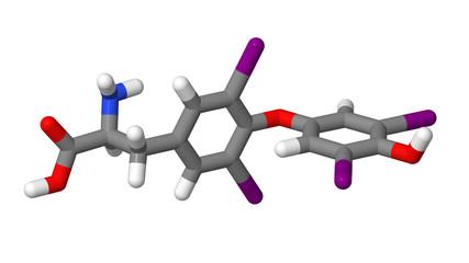 Thyroxine (T4) sticks molecular model