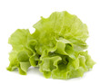 Fresh lettuce salad leaves bunch
