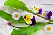 Blüten - Salat mit Löwenzahn