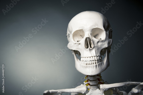 Human skeleton body on a grey background