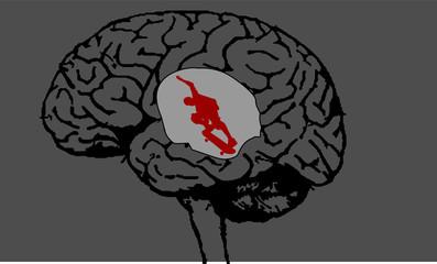 cerebro skatista