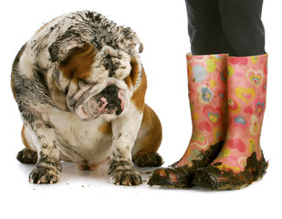 dirty boots and dirty dog
