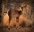 Young Female Njala with Winter Sunset Sun in Hair