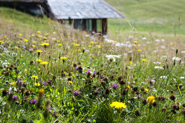 Mountain flowers meadow