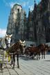 Horse-drawn Carriage in Vienna