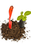 Transplant of a tree and garden tools on a white background. Con poster