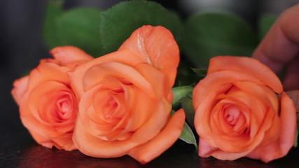 Orange roses laying on the black background