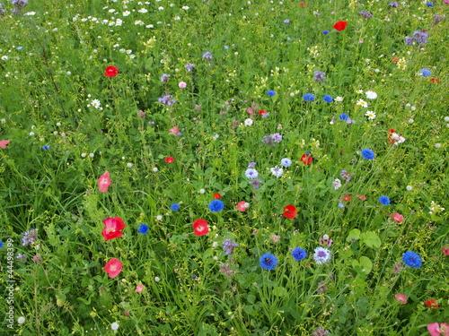 Bunte Blumenwiese - Hintergrund