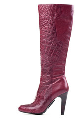 Fashion knee-high boot isolated over white