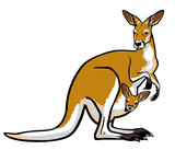 red kangaroo female with joey in pouch poster
