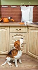 Kitchen pilferers