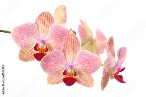 Fototapeten,orchidee,blume,blume,blume