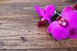Fototapeten,cymbidium,holz,orchidaceae,hintergrund