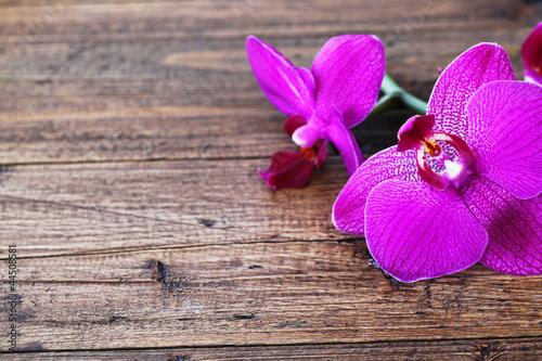 Fototapeten,orchidee,holz,orchidaceae,hintergrund
