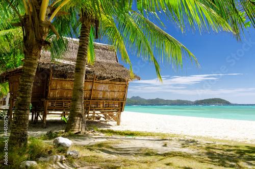 Fototapeten,palme,ozean,natur,insel