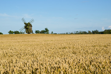 Old windmill in a wheat field