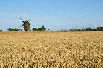 Old windmill in a wheat field