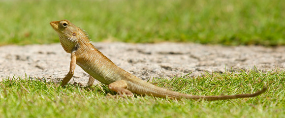 Close up of a lizard
