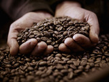 Close up of hands cupping coffee beans