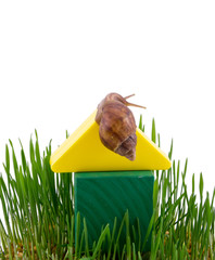 The snail creeping on a toy lodge in a grass.