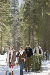 Smiling couples with fresh cut Christmas tree and sled in snowy woods