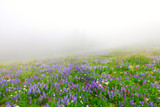 Wild flowers blooming in the fog near Mt. Rainier