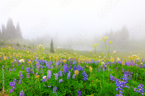 Beautiful wild flowers field with lake in the mountains
