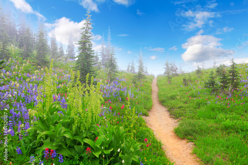 Mt.Rainier. Beautiful mountain landscape with wild flowers. © Iriana Shiyan