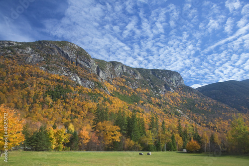 Autumn leaves on trees along mountain