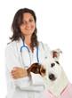 Visita veterinaria ad un jack russell