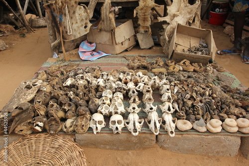 Monkey skull on voodoo fetish market, Togo, Africa