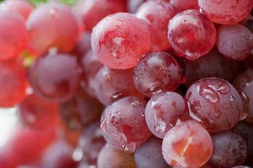 Weintrauben 12.056