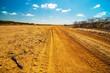 A Dirt Road in the Desert