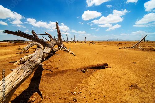 A Fallen Tree in a Desert