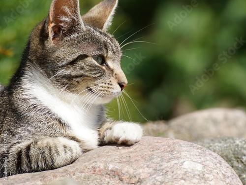 Träge in der Sonne - Katzenporträt, Ausschnitt