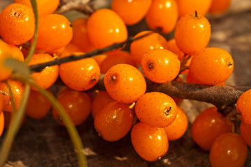 orange sea-buckthorn berries close-up