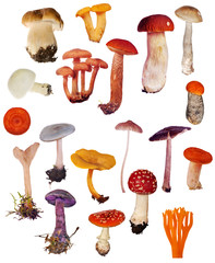 set of isolated different mushrooms