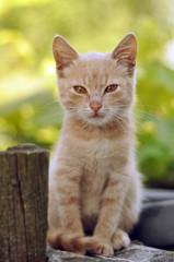 Cute red kitten outdoors