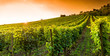 Weingut an der hessischen Bergstraße - 44556571