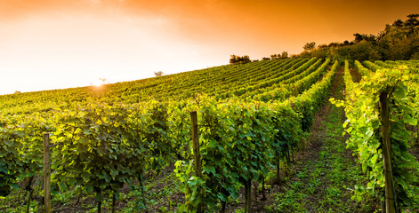 Weingut an der hessischen Bergstraße © Loocid GmbH
