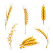 Wheat, set