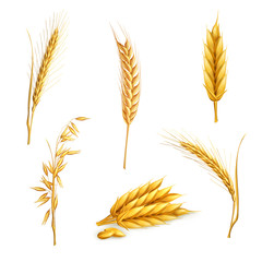 Wheat, set